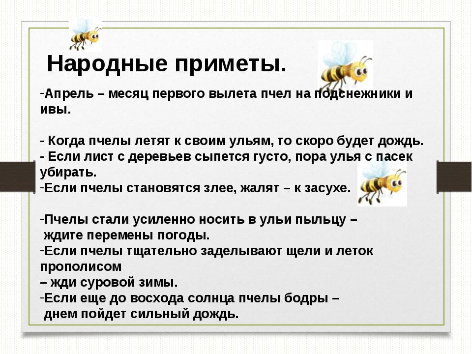 Народные приметы. Апрель – месяц первого вылета пчел на подснежники и ивы. -...
