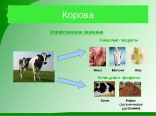 Корова Хозяйственное значение Пищевые продукты Мясо Непищевые продукты Кожа