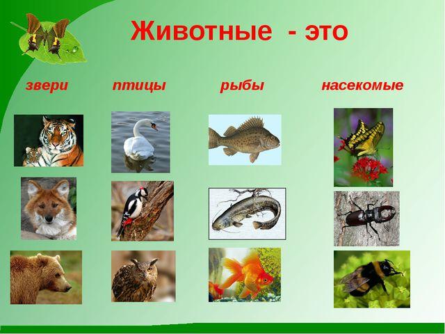 Животные - это звери птицы рыбы насекомые