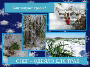 Оказывается!  У некоторых растений можно наблюдать рост и зимой. В конце зи