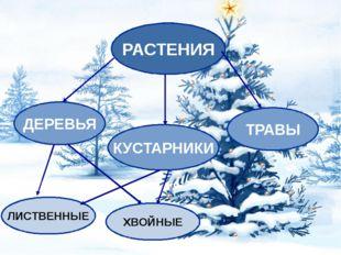 Растения зимой Деревья и кустарники, скованные холодом, впадают в зимний со