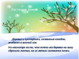 У многих растений есть так называемый период отдыха, в основном это зима. Ли