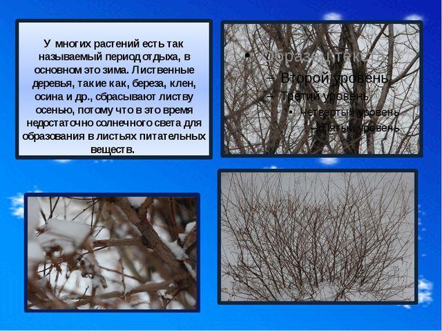 Но несмотря на то, что почти все деревья на зиму сбросили листья, на их вет...