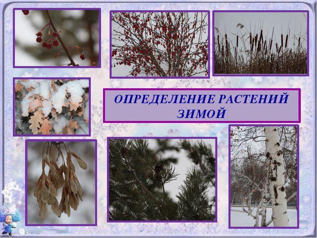 Раз морозною зимой