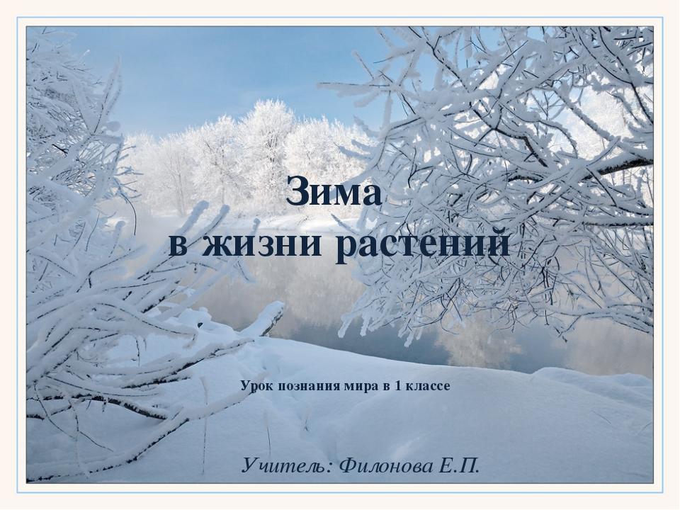 Зима в жизни растений Урок познания мира в 1 классе Учитель: Филонова Е.П.