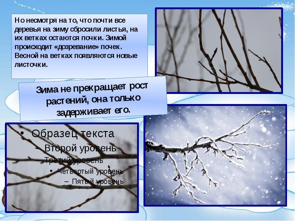 Вечнозеленые или хвойные деревья стоят с листвой несколько лет и теряют листь...