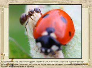 В муравейнике есть еще немало других удивительных обитателей: здесь есть мура