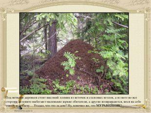 Под ветками деревьев стоит высокий холмик из веточек и сосновых иголок, а из