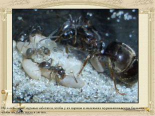 Ну, а остальные муравьи заботятся, чтобы у их царицы и маленьких муравьишек в