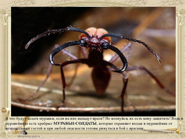 А что будут делать муравьи, если на них нападут враги? Не волнуйся, их есть к...
