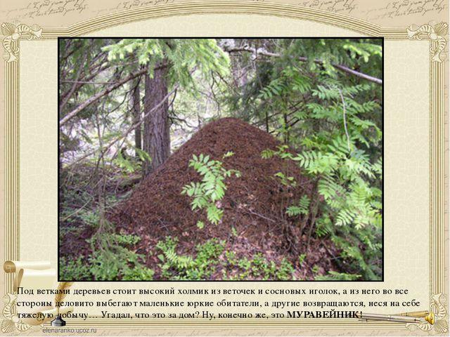 Под ветками деревьев стоит высокий холмик из веточек и сосновых иголок, а из...