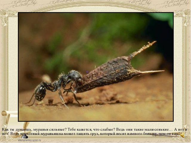 Как ты думаешь, муравьи сильные? Тебе кажется, что слабые? Ведь они такие ма...
