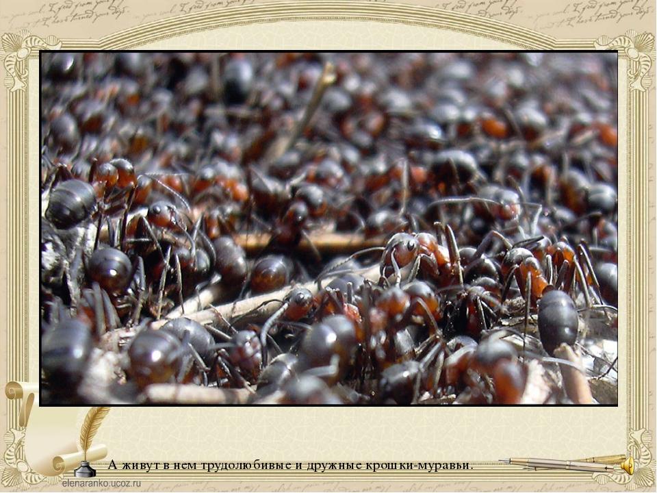 А живут в нем трудолюбивые и дружные крошки-муравьи.