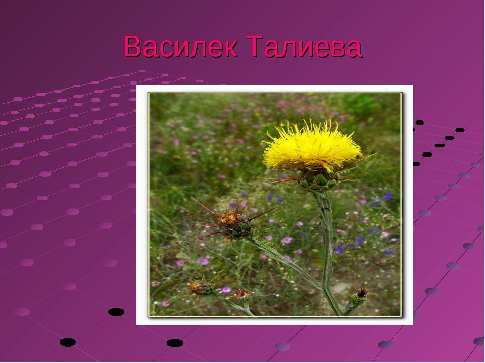 Василек Талиева