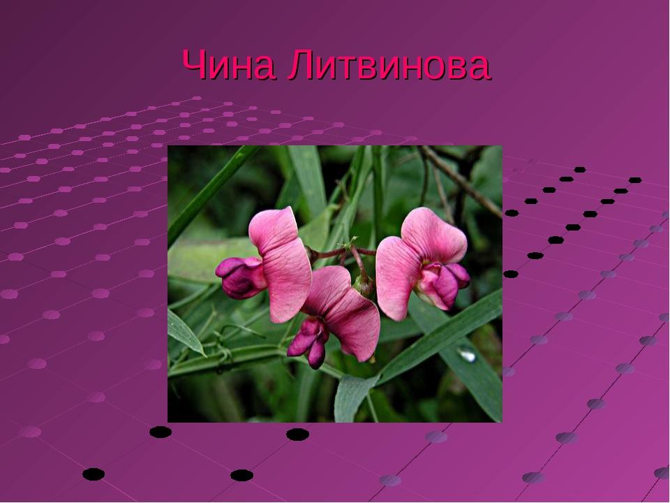 Чина Литвинова