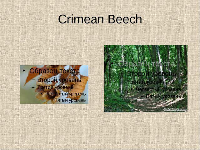 Crimean Beech