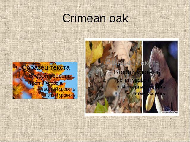 Crimean oak