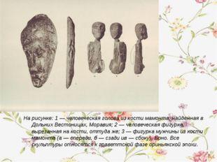 На рисунке: 1 — человеческая голова из кости мамонта, найденная в Дольних Вес