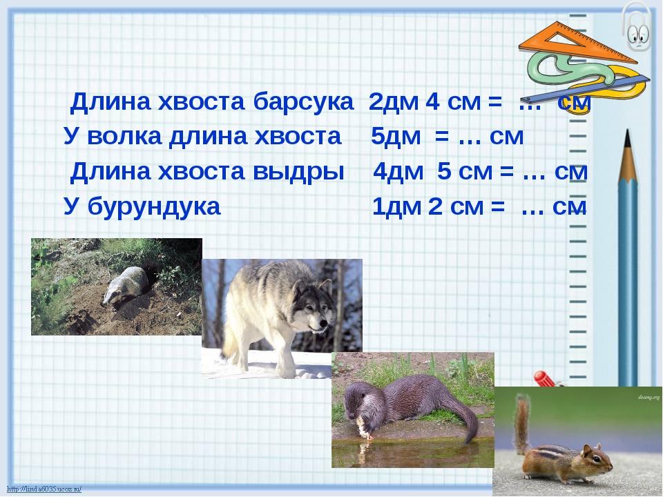 Длина хвоста барсука 2дм 4 см = … см У волка длина хвоста 5дм = … см Длина...