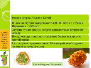 Красный огурец - Тладианта В одном зрелом огурце может быть от 100 до 400 семян