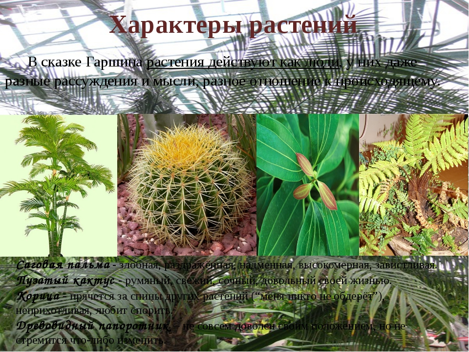 Характеры растений     В сказке Гаршина растения действуют как люди, у них д...