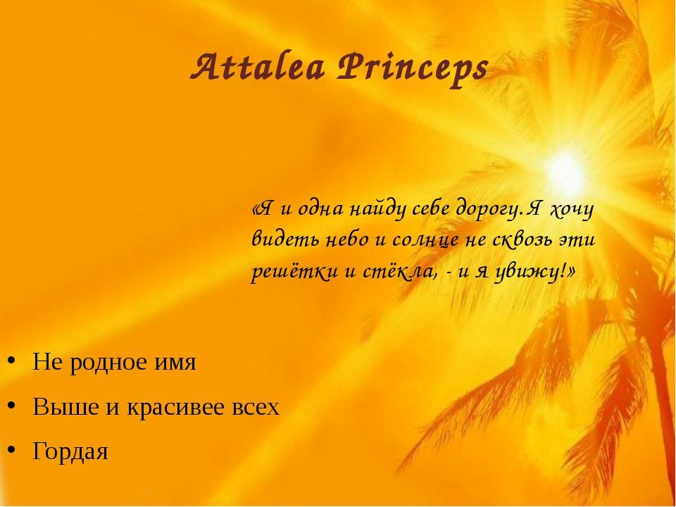 Attalea Princeps Не родное имя Выше и красивее всех Гордая