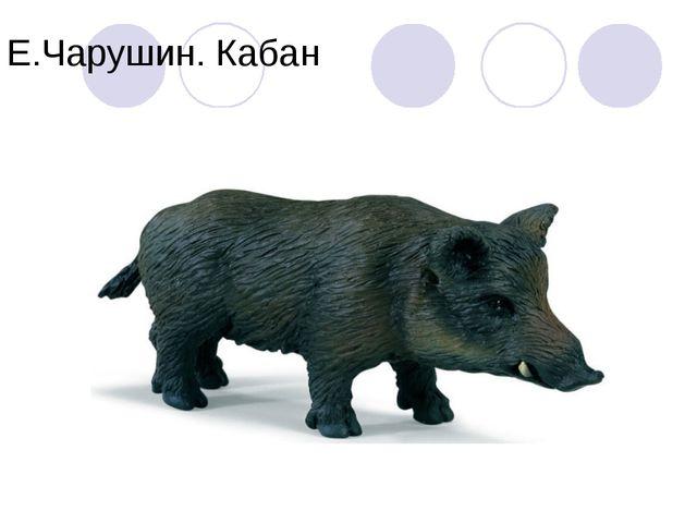 Е.Чарушин. Кабан