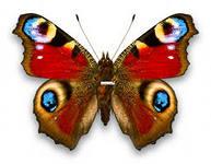 http://im3-tub-ru.yandex.net/i?id=3762604-26-72&n=21