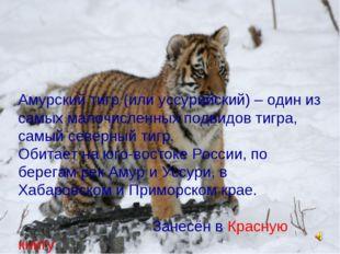 * Мерзлякова Людмила Алексеевна * Амурский тигр (или уссурийский) – один из с