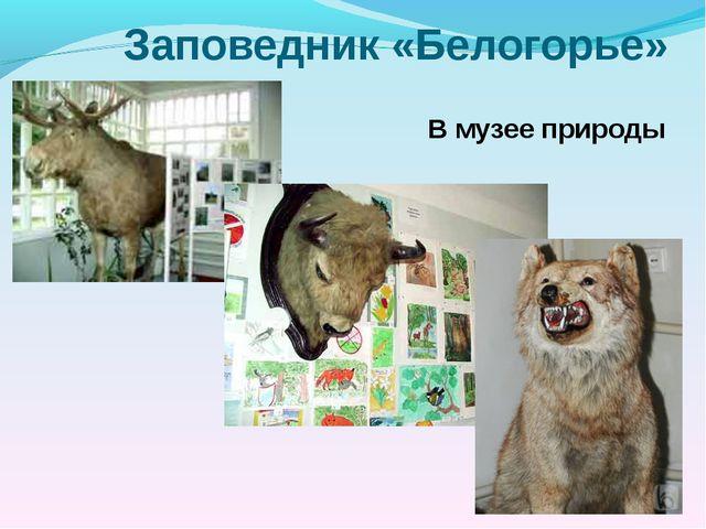 Заповедник «Белогорье» В музее природы Библиотека МОУ-СОШ № 7