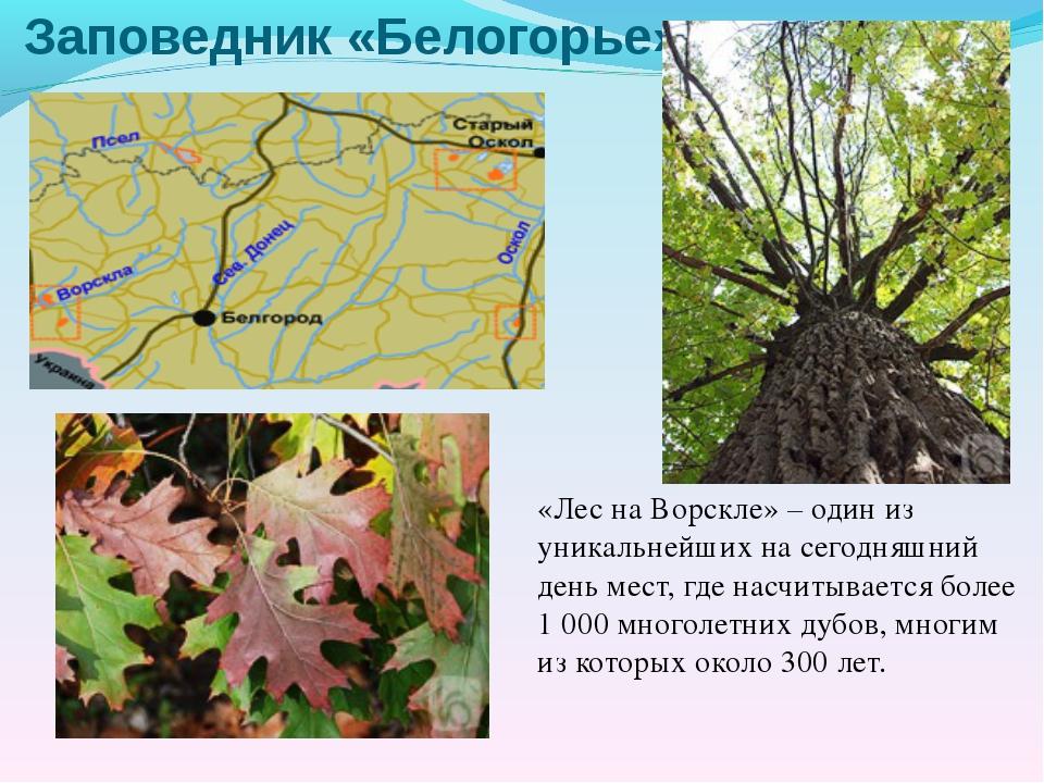 Заповедник «Белогорье» «Лес на Ворскле» – один из уникальнейших на сегодняшни...