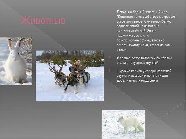 Животные Довольно бедный животный мир. Животные приспособились к суровым усло...