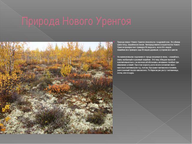 Природа Нового Уренгоя Природа вокруг Нового Уренгоя относиться к тундровой з...