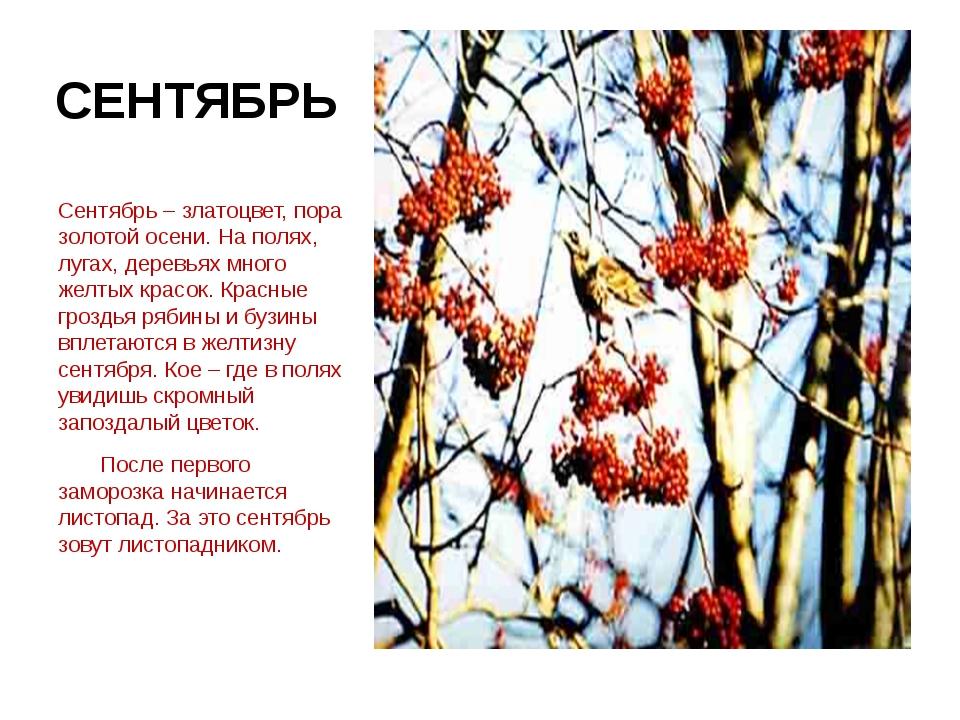 СЕНТЯБРЬ Сентябрь – златоцвет, пора золотой осени. На полях, лугах, деревьях...