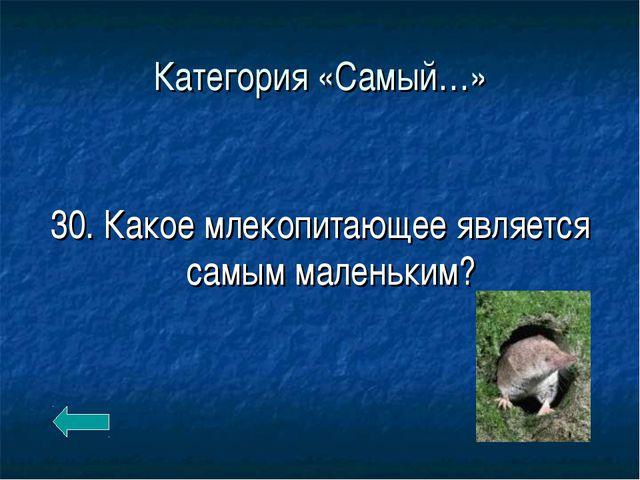 Категория «Самый…» 30. Какое млекопитающее является самым маленьким?