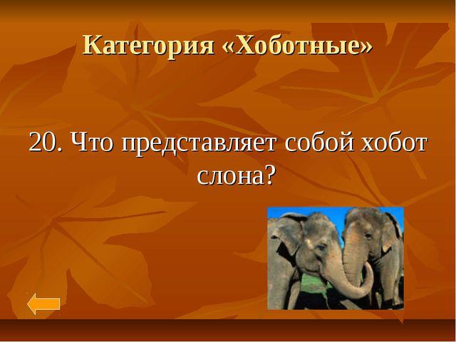 Категория «Хоботные» 20. Что представляет собой хобот слона?