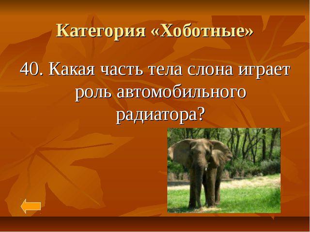 Категория «Хоботные» 40. Какая часть тела слона играет роль автомобильного ра...