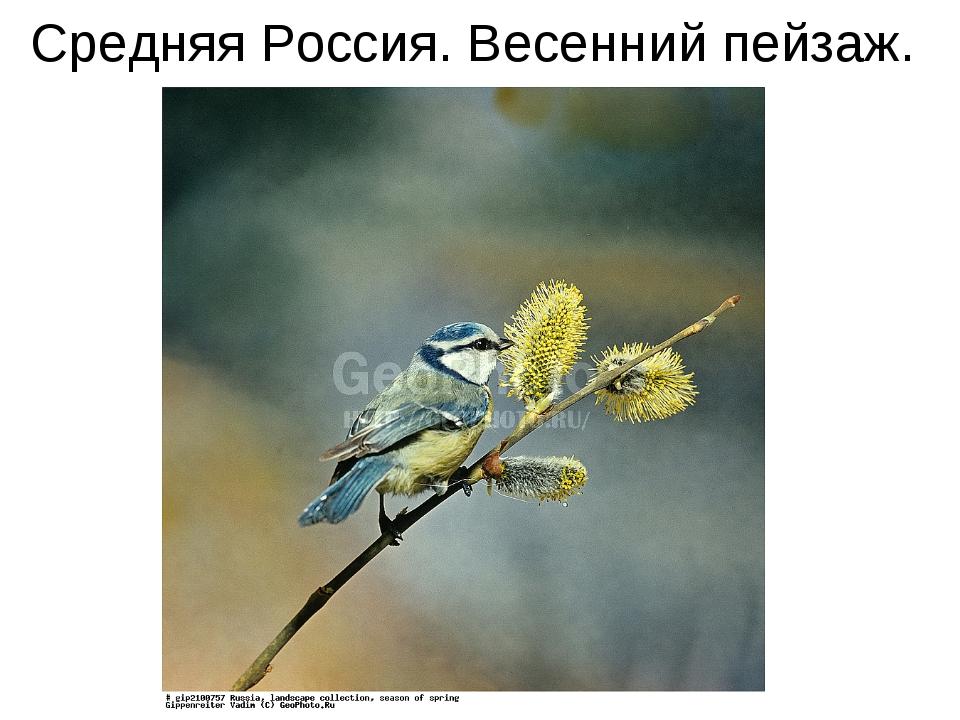Средняя Россия. Весенний пейзаж.