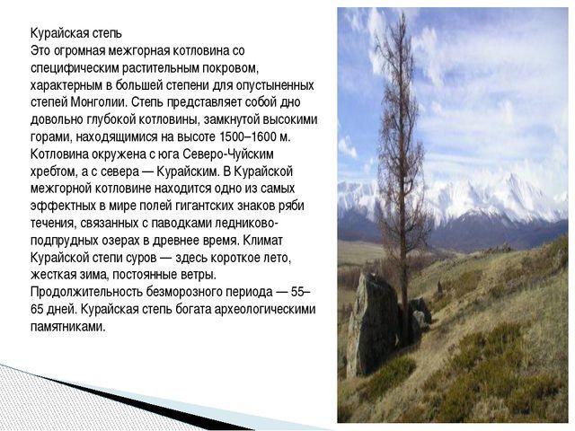 Курайская степь Это огромная межгорная котловина со специфическим растительн...
