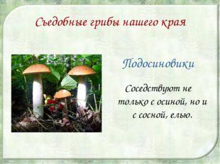 Съедобные грибы нашего края Подосиновики Соседствуют не только с осиной, но и