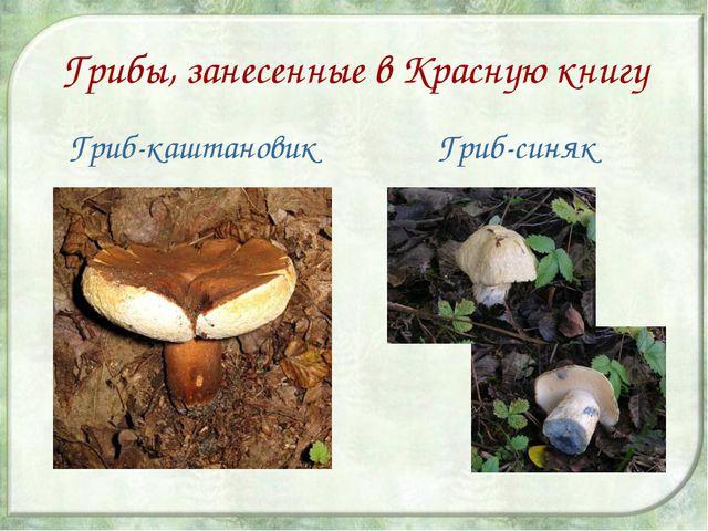 Грибы, занесенные в Красную книгу Гриб-каштановик Гриб-синяк