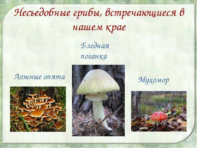 Несъедобные грибы, встречающиеся в нашем крае Ложные опята Бледная поганка Му...