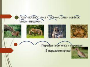 Лось - лосёнок, лиса - лисёнок, сова - совёнок, мышь - мышонок. Перепел переп