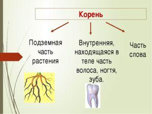 Корень Подземная часть растения Внутренняя, находящаяся в теле часть волоса,