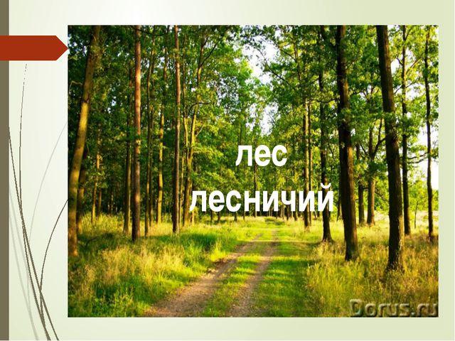 лес лесничий