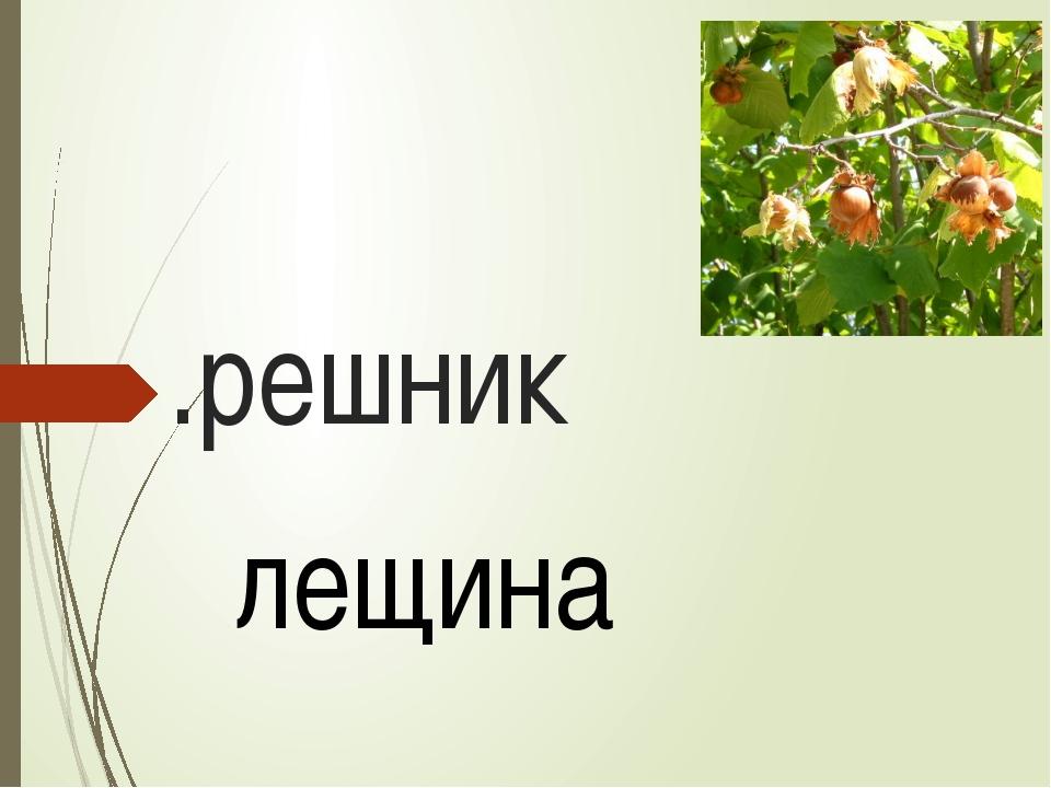 .решник лещина