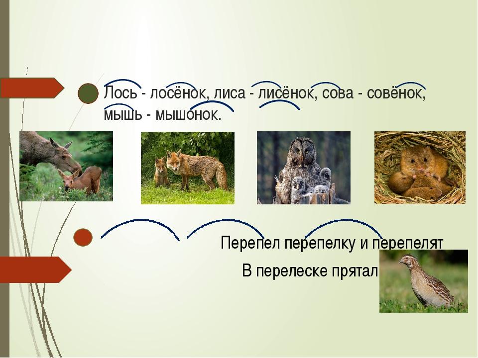 Лось - лосёнок, лиса - лисёнок, сова - совёнок, мышь - мышонок. Перепел переп...