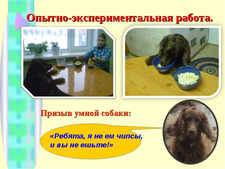 Опытно-экспериментальная работа. Призыв умной собаки: «Ребята, я не ем чипсы,...