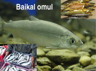 Baikal omul