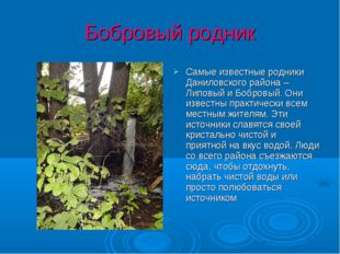 Бобровый родник Самые известные родники Даниловского района – Липовый и Бобро